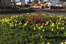 Muirkirk Bulbs in Bloom